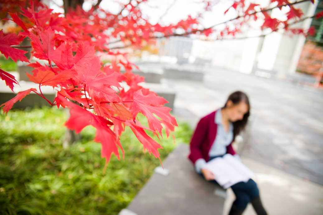 A student reads a book on the Student Plaza in the fall.